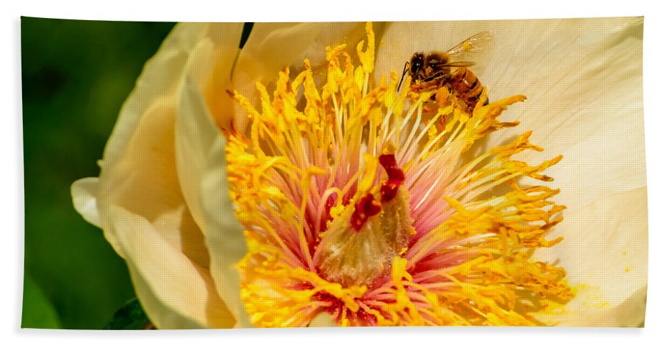 Early Glow Peony Bath Sheet featuring the photograph Bee And A Pale Yellow Early Glow Peony by Robert L Phillips