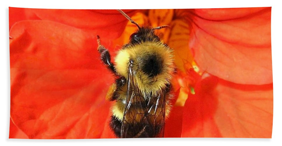 Bee Hand Towel featuring the photograph Bee And Nasturtium by Will Borden
