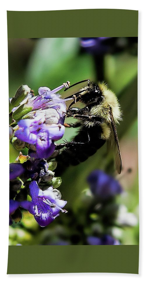 Bee Hand Towel featuring the photograph bee by Cynthia Frohlich