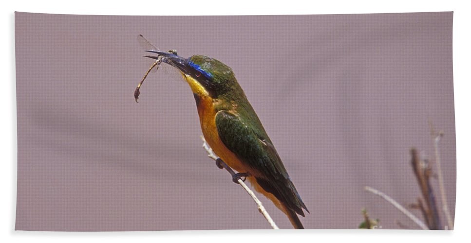 African Birds Hand Towel featuring the photograph Bee Eater And Dragonfly by Sandra Bronstein