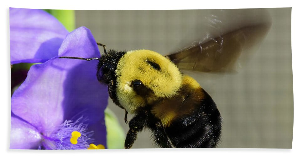 Insecta Hand Towel featuring the photograph Bee Landing On Spiderwort Flower by Steve Samples