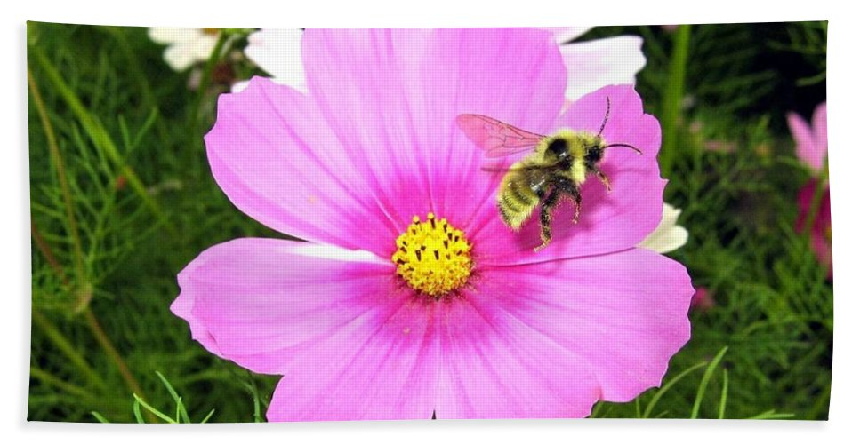 Bee Hand Towel featuring the photograph Bee-line 6 by Will Borden