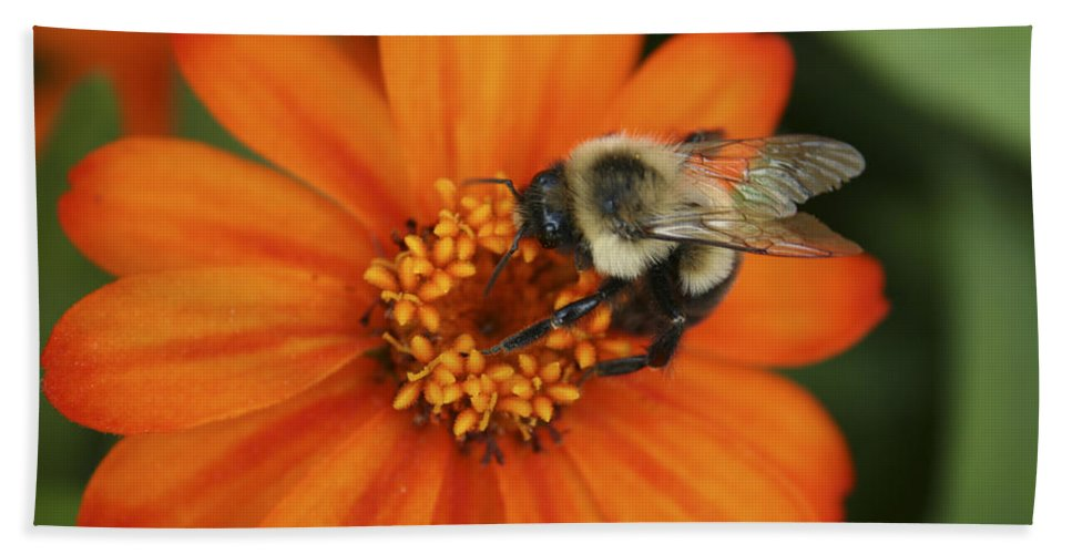 Bee Bath Towel featuring the photograph Bee On Aster by Margie Wildblood