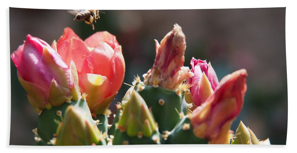 Landscape Hand Towel featuring the photograph Bee On Cactus In Croatia by Stan Roban