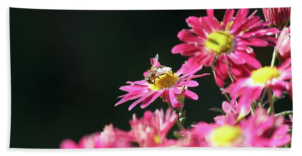Nature Hand Towel featuring the photograph Bee On Flower Spring Scene by Goce Risteski