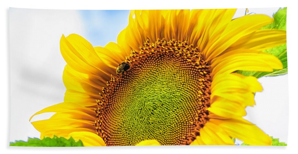 Michigan Hand Towel featuring the photograph Bee On Sunflower by Lars Lentz