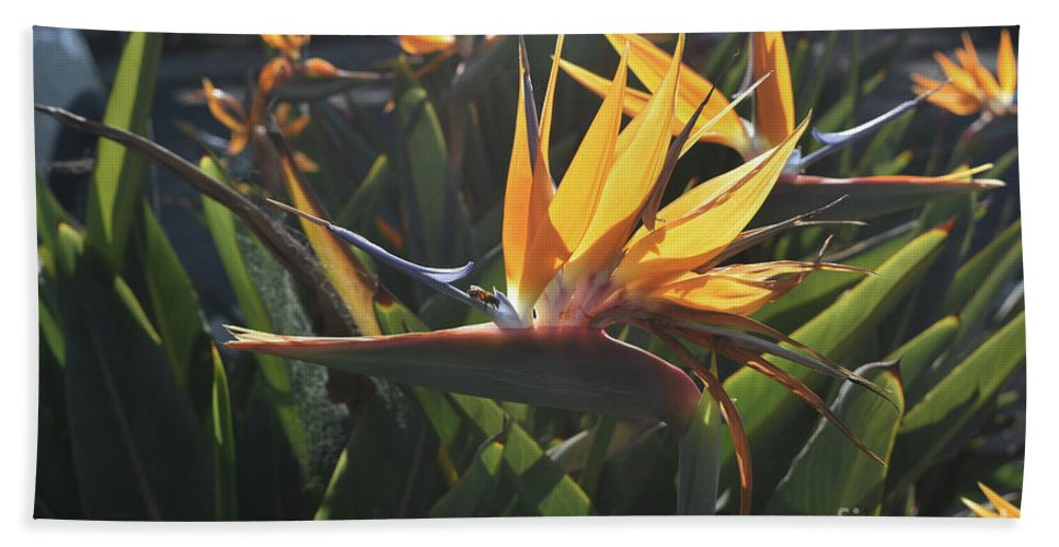 Bird-of-paradise Hand Towel featuring the photograph Bee Resting On The Petals Of A Bird Of Paradise by DejaVu Designs