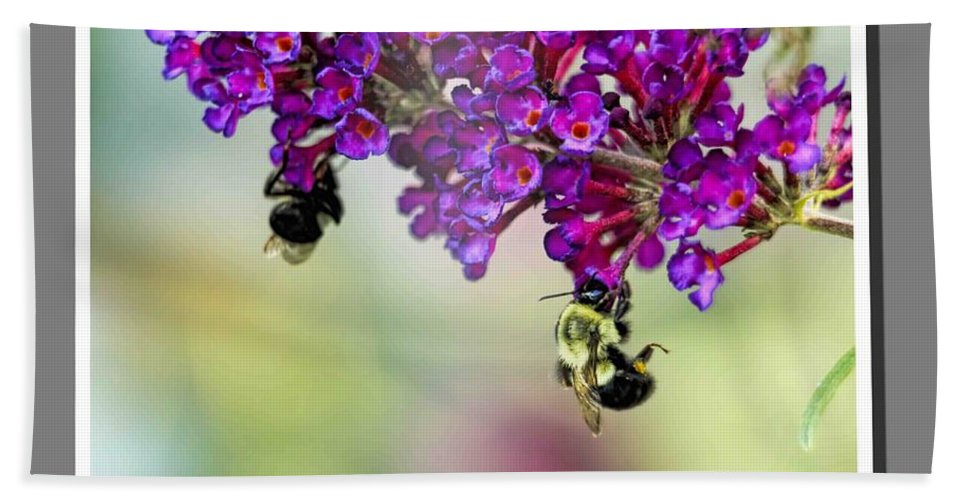 Recent Hand Towel featuring the photograph Bees On Butterfly Bush Framed by Geraldine Scull