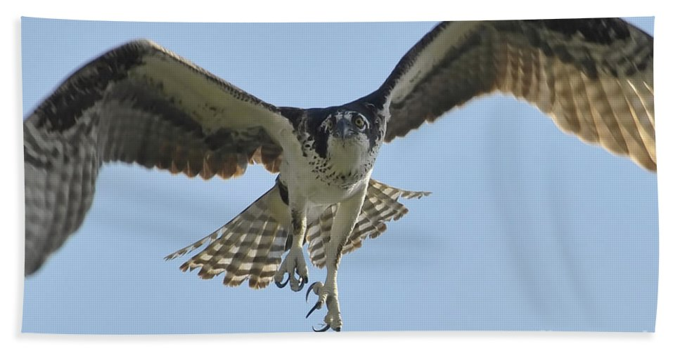 Osprey Hand Towel featuring the photograph Before The Catch by David Lee Thompson