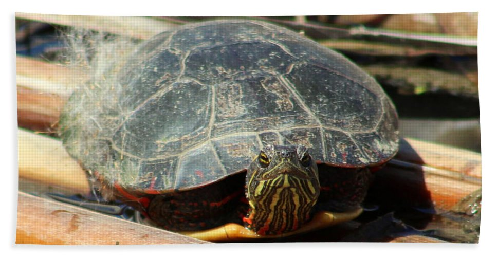 Behold Hand Towel featuring the photograph Behold The Turtle by Anita Hiltz