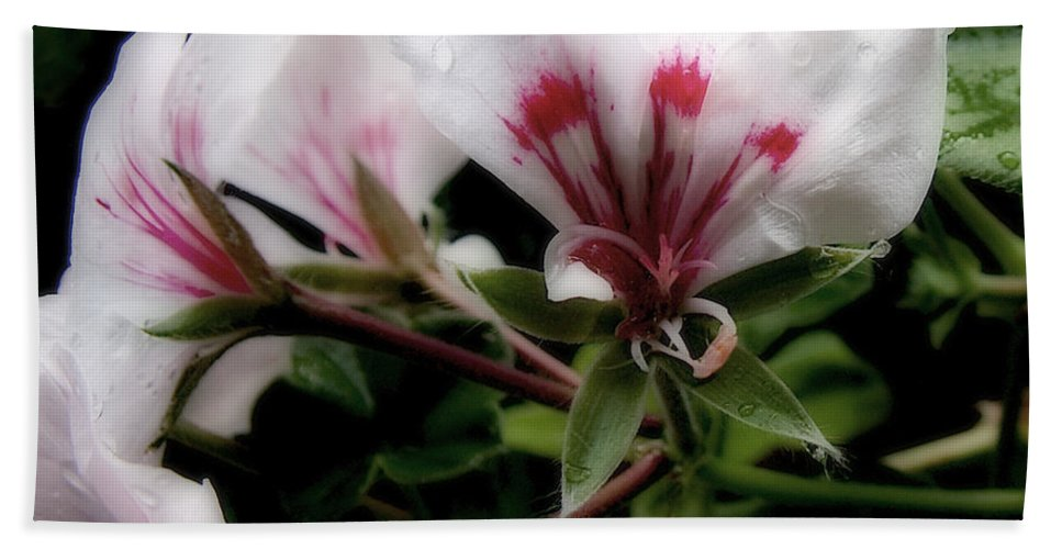 Cherry Bath Towel featuring the photograph Bejewelled by RC DeWinter
