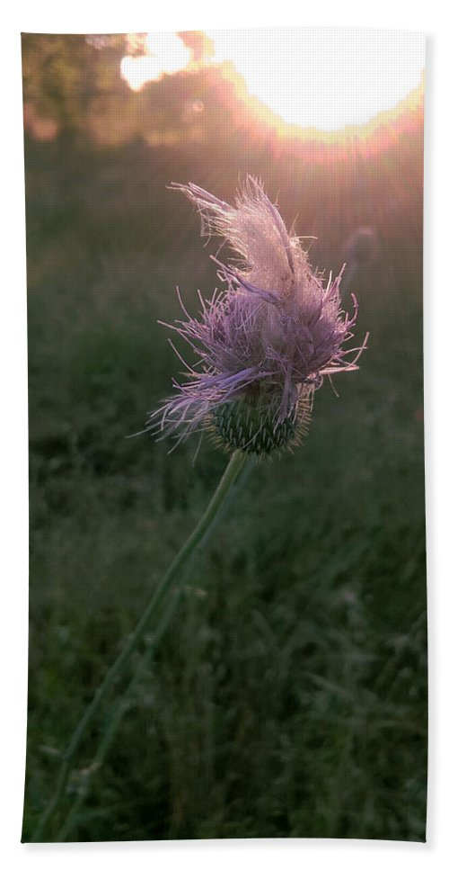 Thistle Bath Sheet featuring the photograph Belles Flower by Martin Shaw