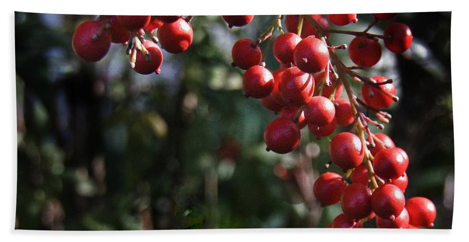 California Scenes Hand Towel featuring the photograph Berry Tree by Norman Andrus