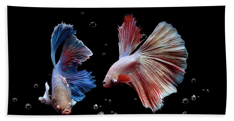 Animal Bath Towel featuring the photograph Betta1265 by Bang Yos