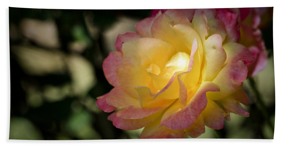Rose Hand Towel featuring the photograph Bettys Rose by Teresa Mucha