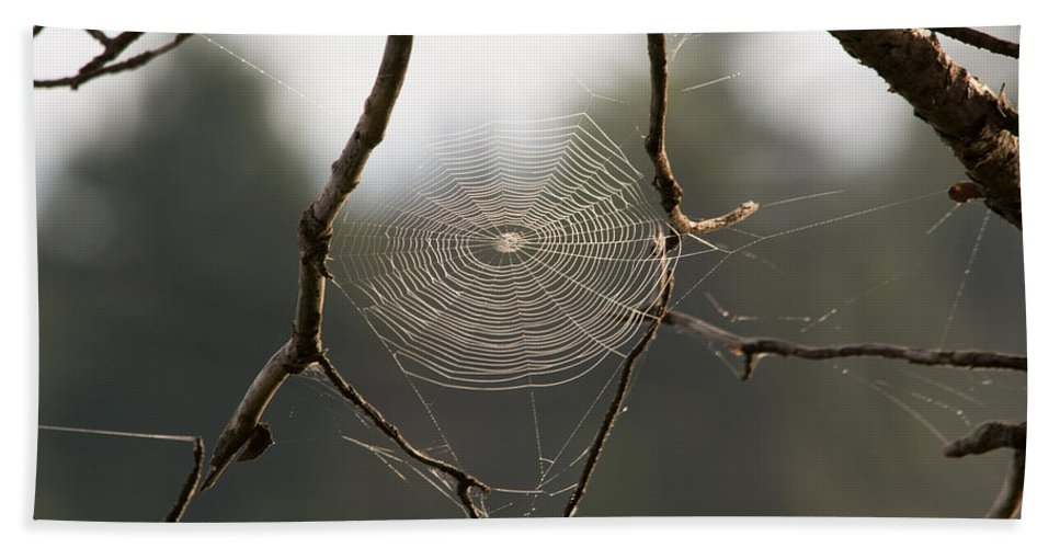 Spider Web Hand Towel featuring the photograph Between The Twigs by Linda Kerkau