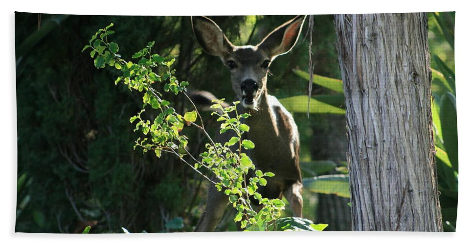 Beverly Hills Bath Sheet featuring the photograph Beverly Hills Deer by Marna Edwards Flavell