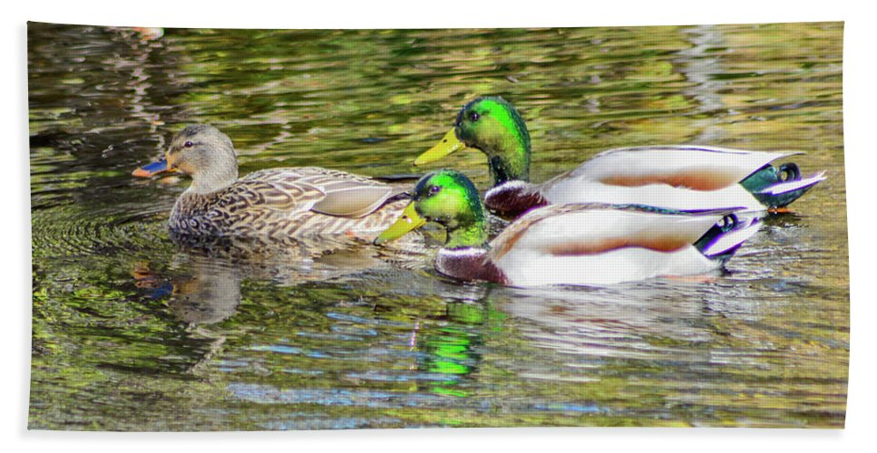 Animals Hand Towel featuring the photograph Bidwell Ducks In Fall by Keith Lander