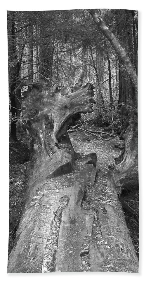 Landscape Hand Towel featuring the photograph Big Basin 2 by Karen W Meyer