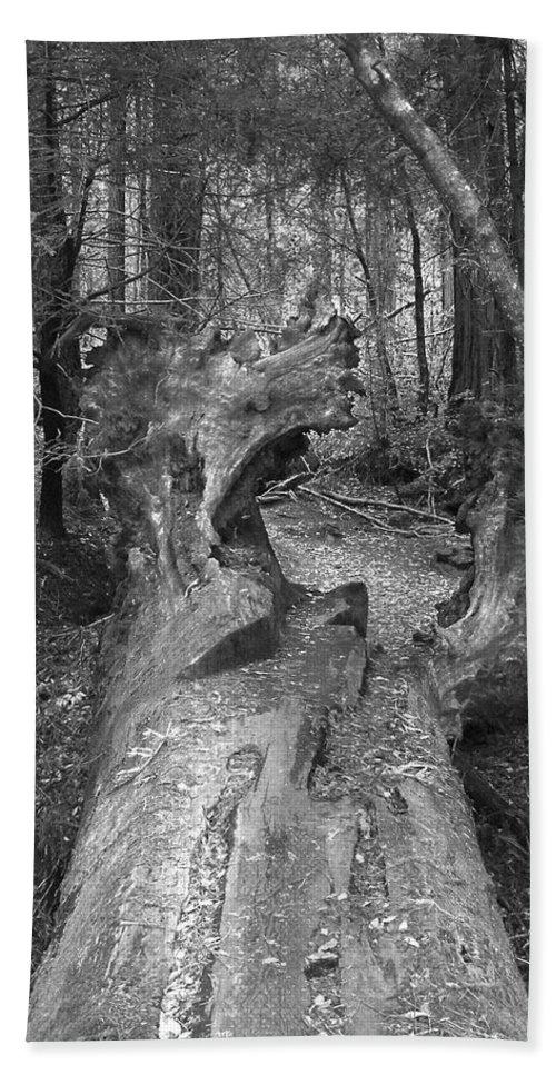 Landscape Bath Sheet featuring the photograph Big Basin 2 by Karen W Meyer