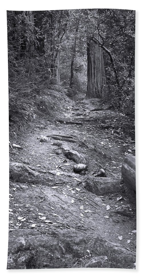 Landscape Bath Towel featuring the photograph Big Basin Redwoods Sp 1 by Karen W Meyer