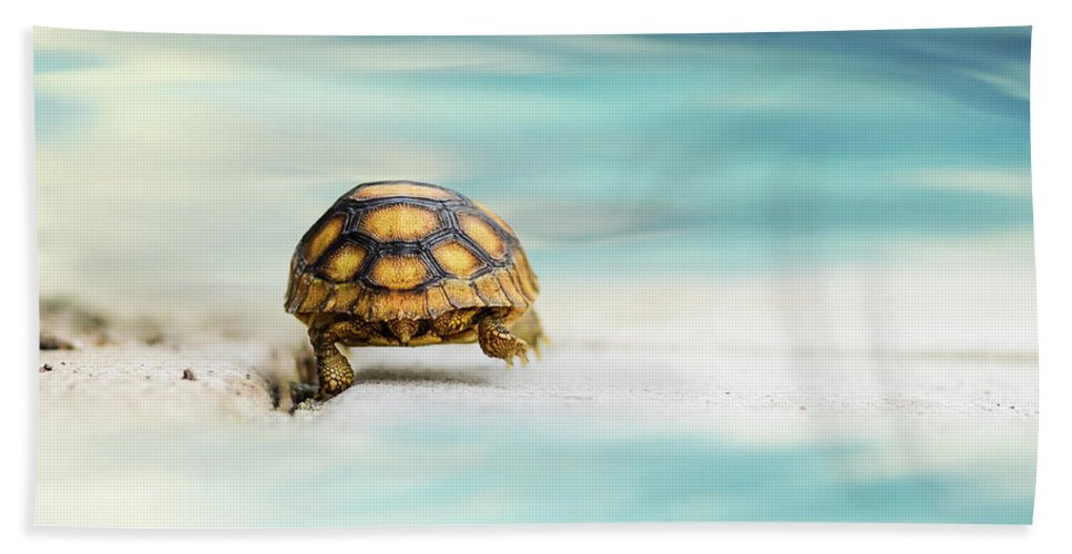 Turtle Bath Towel featuring the photograph Big Big World by Laura Fasulo