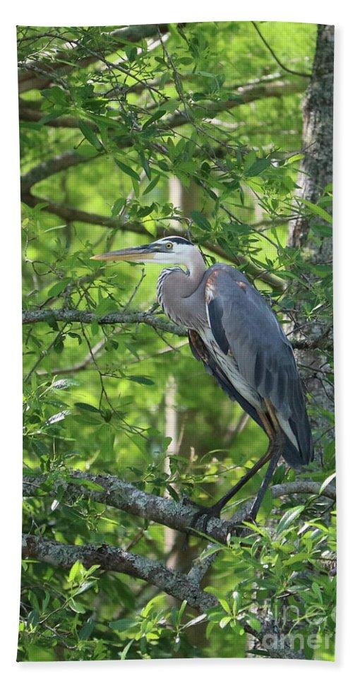 Great Blue Heron Bath Sheet featuring the photograph Big Blue In Green Tree by Carol Groenen