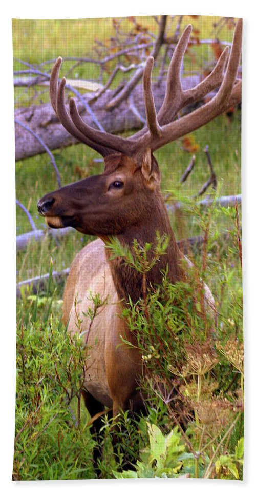 Bull Elk Bath Sheet featuring the photograph Big Bull by Marty Koch