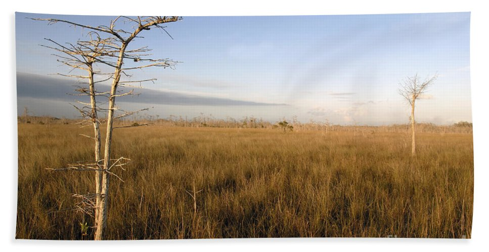 Bald Cypress Hand Towel featuring the photograph Big Cypress by David Lee Thompson
