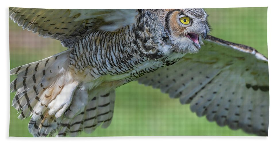 Owl Hand Towel featuring the photograph Big Eyes... by Ian Sempowski