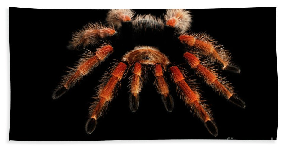 Spider Bath Towel featuring the photograph Big hairy Tarantula Theraphosidae by Sergey Taran