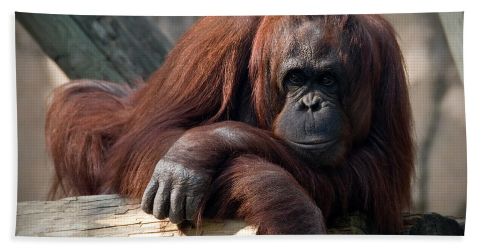 Orangutang Hand Towel featuring the photograph Big Hands by Steven Sparks