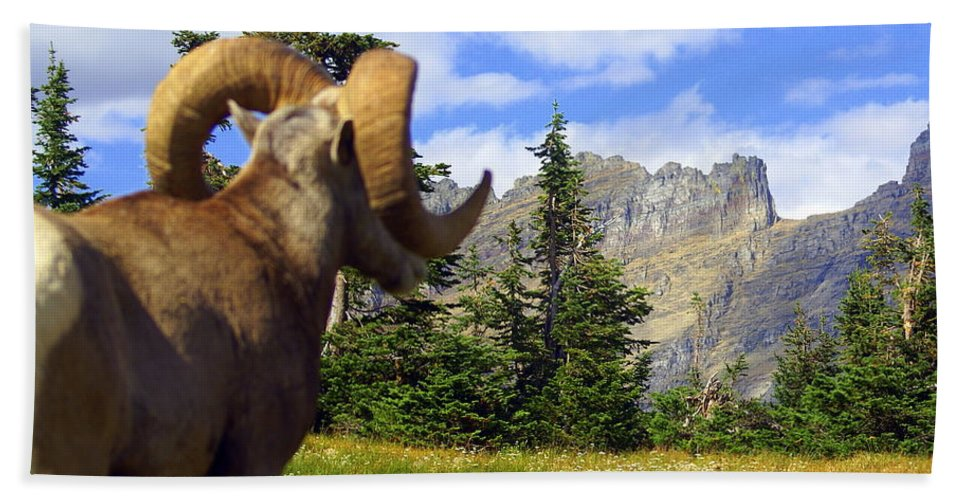 Glacier National Park Bath Sheet featuring the photograph Big Horn 3 by Marty Koch