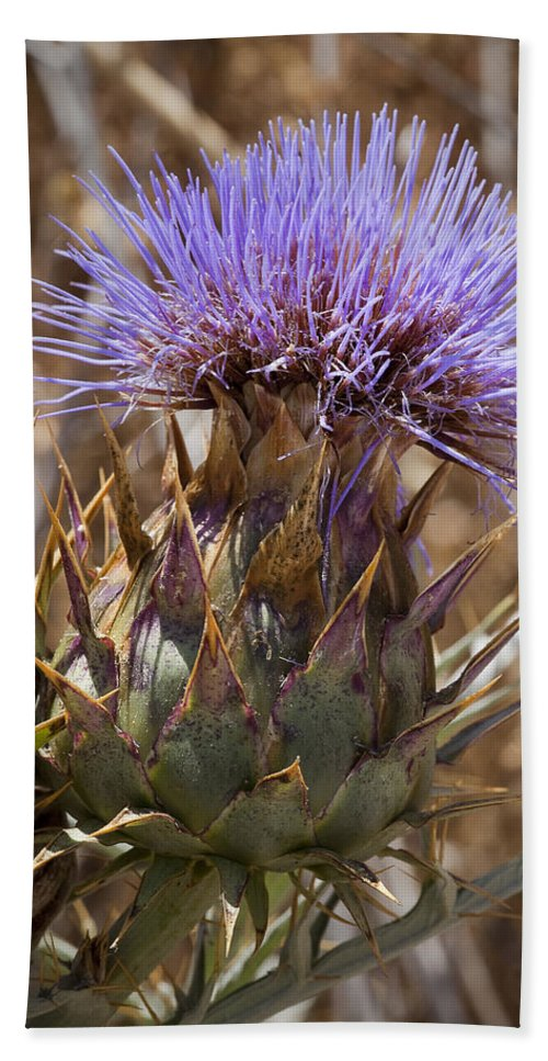 Artichoke Thistles Bath Sheet featuring the photograph Big Thistle 2 by Kelley King