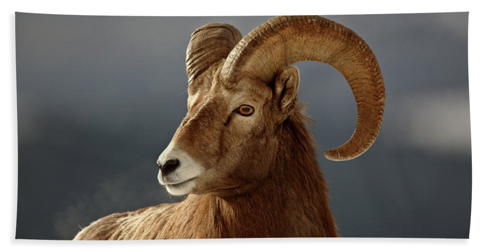 Rocky Mountain Hand Towel featuring the digital art Bighorn Sheep In Winter by Mark Duffy