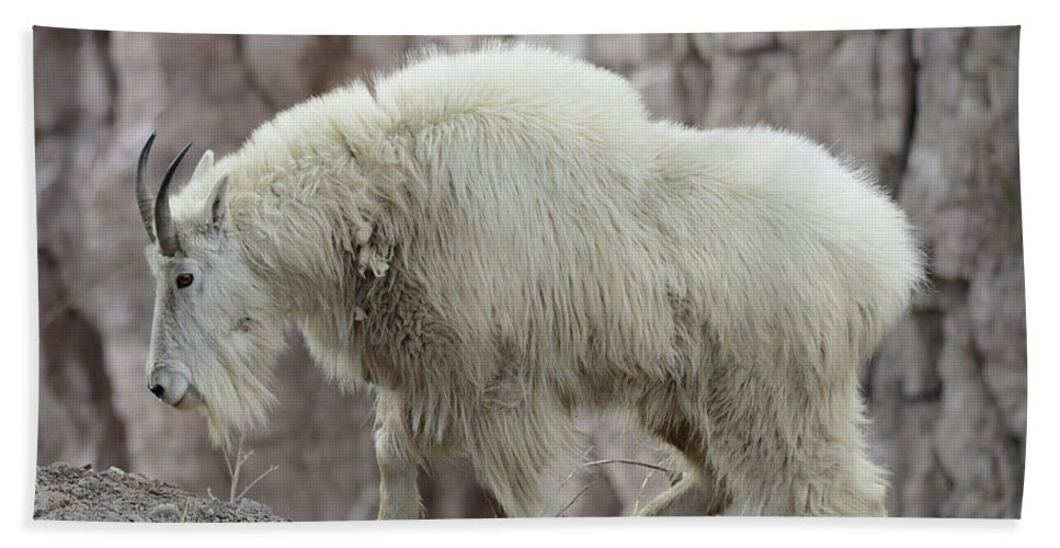 Billy Hand Towel featuring the photograph Billy Goats Gruff by Whispering Peaks Photography