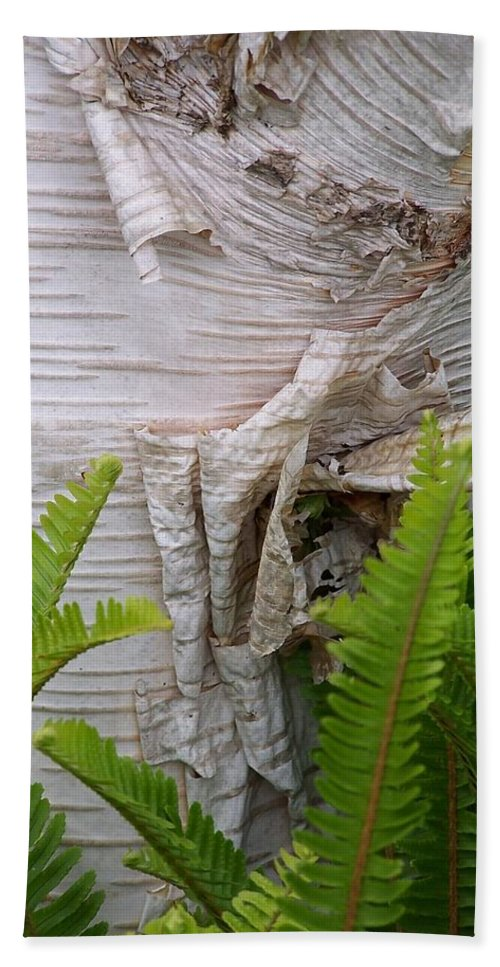 Tree Hand Towel featuring the photograph Birch Fern by Gale Cochran-Smith