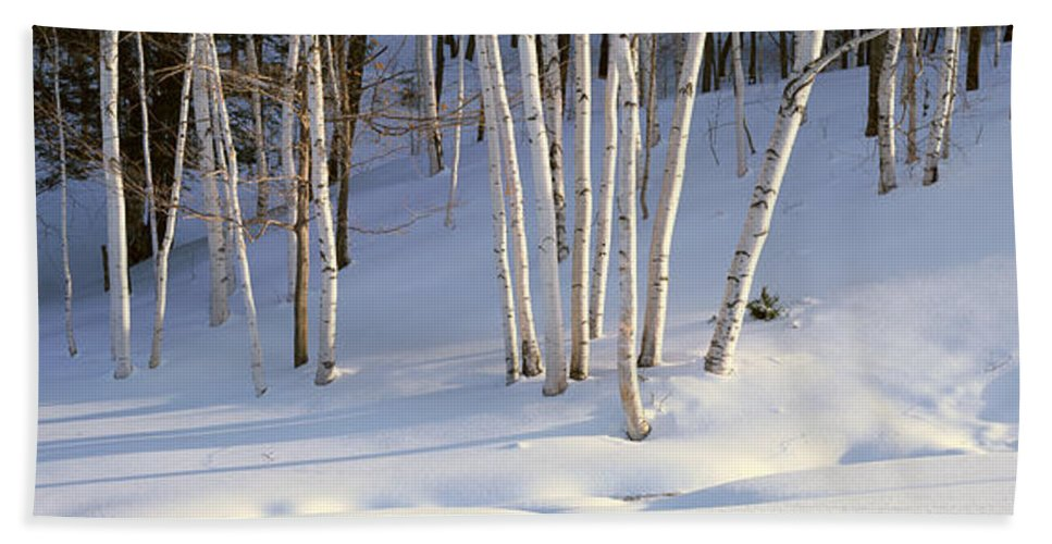 Photography Bath Sheet featuring the photograph Birch Trees In The Snow, South by Panoramic Images