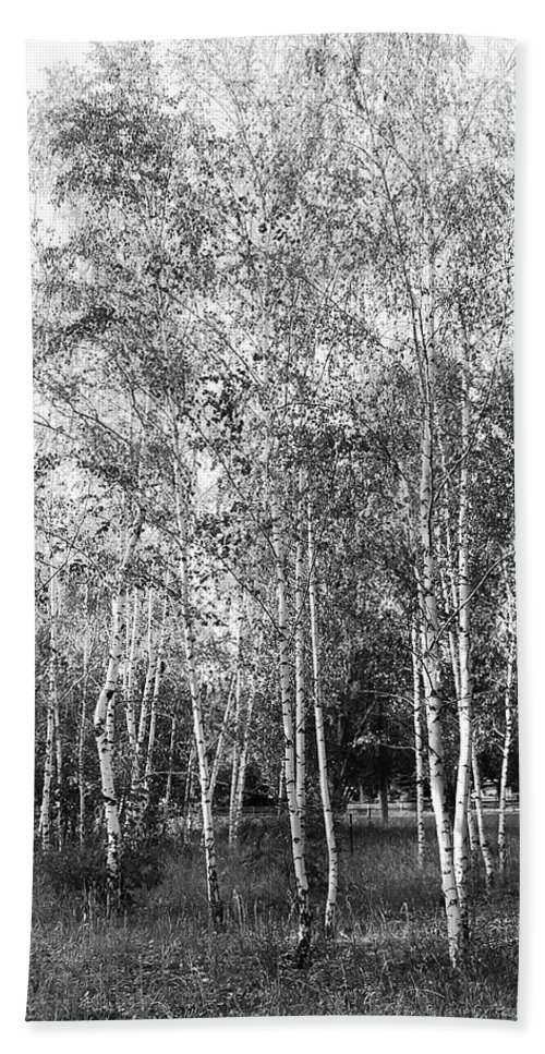 Art Bath Sheet featuring the photograph Birch Trees1 by Svetlana Sewell