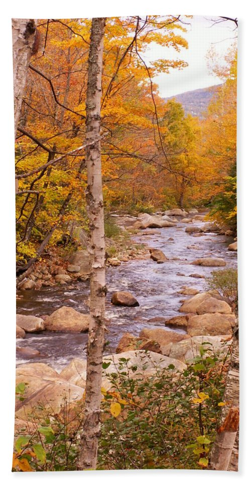Landscape Bath Sheet featuring the photograph Birches On The Kancamagus Highway by Nancy Griswold