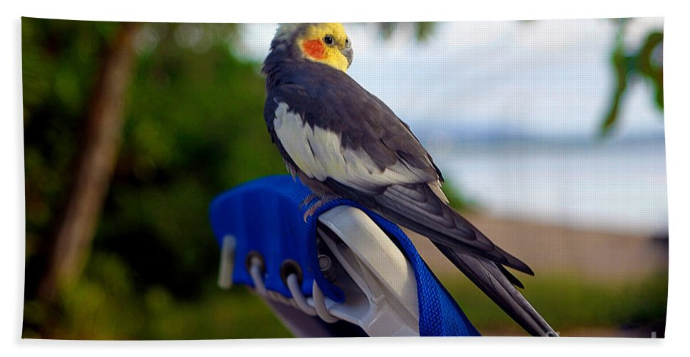 Bird Hand Towel featuring the photograph Bird In Paradise by Madeline Ellis