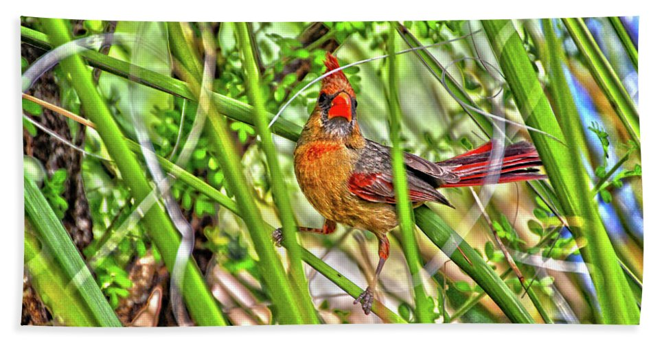 Bath Sheet featuring the photograph Bird In The Brush H D R by Kevin Mcenerney