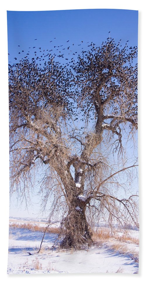 Trees Hand Towel featuring the photograph Bird Land by James BO Insogna