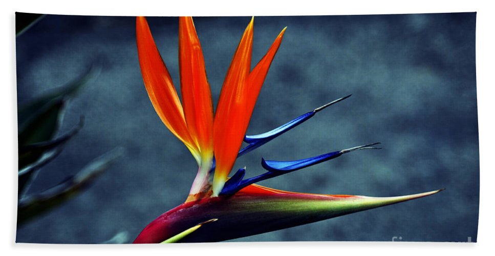 Clay Hand Towel featuring the photograph Bird Of Paradise by Clayton Bruster