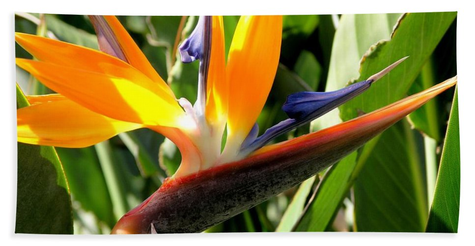 Bird Of Paradise Hand Towel featuring the photograph Bird Of Paradise by Mary Deal