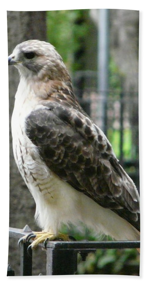 Bird Of Prey Bath Sheet featuring the photograph Bird Of Prey by Valerie Ornstein