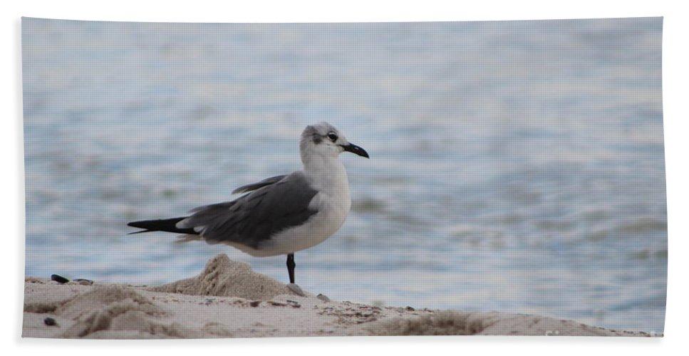 Bird Hand Towel featuring the photograph Bird On The Beach by Jonathan Melilli