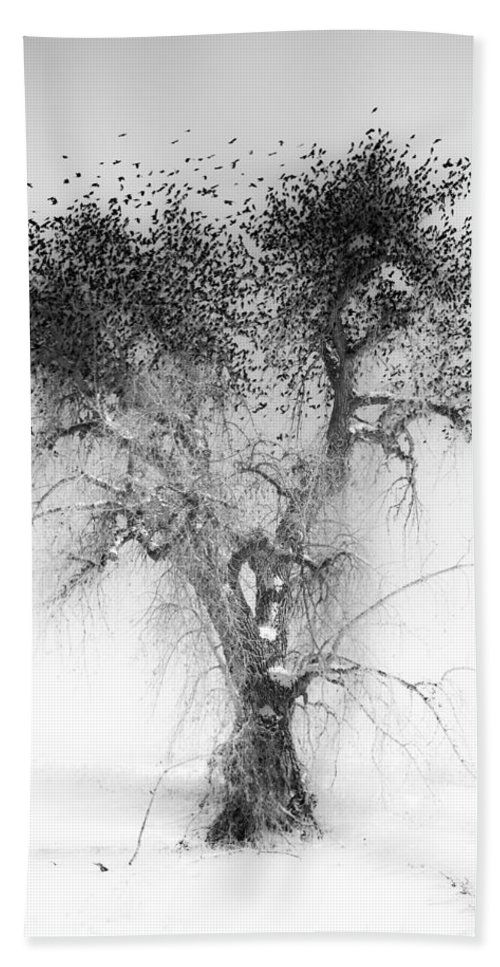 Birds Hand Towel featuring the photograph Bird Tree Land Bw Fine Art Print by James BO Insogna