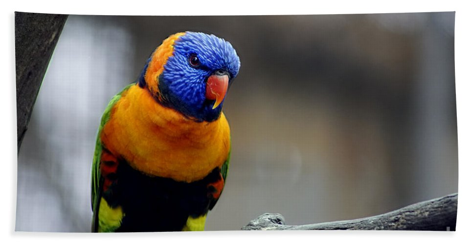 Birds Hand Towel featuring the photograph Birds 27 by Ben Yassa