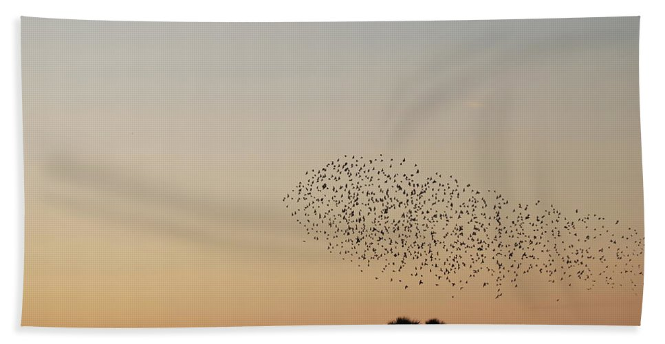Nature Hand Towel featuring the photograph Birds In The Sun by Rob Hans